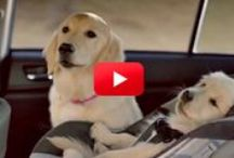 FUNNY ANIMAL COMMERCIALS / JUST FOR FUN! / by Marion Sullivan