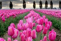 Pasión por las Flores