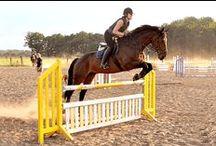 Hobo Reitsport / Alles rund um Hobo Schuhe in verbindung mit Pferden  Pferd und Reiter