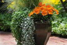 Greenhouse & Gardening
