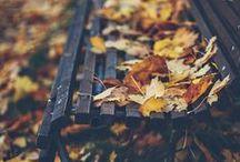Autumn / Autumn Inspired.