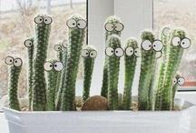 Cactus Day