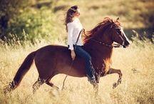 Horses / by Jeanie Elizabeth