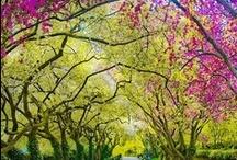 Healthy & Beautiful Trees