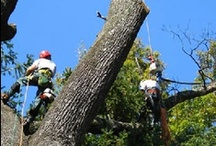 Tree Removal & Tree Trimming