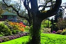 Keeping Your Yard Healthy