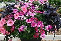 цветы / О цветах в доме и в саду.