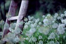 field & meadow / by lemi