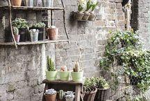 Cactus & Plants