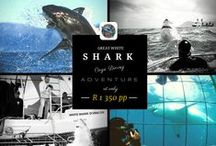 #Greatwhitesharks / Collection of our most loved featured images by White Shark Diving co.