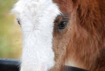 Cute horses / Horses too cute for words