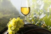 Wine Tours in Santorini / Famous for its exeptional #Vinsanto, #Santorini features traditional and more modern vineyards, where visitors can lear more about their favorite delight and experience a different aspect of the island. http://goo.gl/mqh6Xq