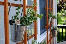 Jardines / Ecología Plantas
