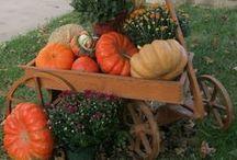 осень...тыквы....