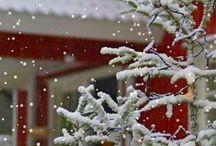 Winter wonderland ⛄️