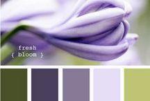 Kolory / kolory