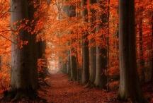Landscape-Seasonal, Autumn