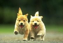 Woof Meow Chirp / Cute Animals, Dogs, Cats, Birds, Tigers, Woof, Lab, Pups, Babies