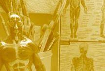 Ecorché /  #ecorche #miniatura #desenho #anatomia #escultura #resina #termoplástico #polymerclay  Figura masculina em escala 1:12 (15cm de altura) em sua musculatura aparente, para estudos de desenho e anatomia, produzido em resina plástica em acabamento que simula o aspecto do tecido muscular, ou qualquer outro acabamento desejável.   Em posição ortostática,base em acrílico transparente.