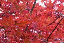 Autumn Gardens / Autumn gardens.
