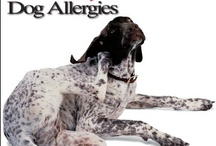 Dogs get allergies too...