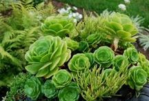 Growing green things / Plants, flowers, succulents, cactuses - my dream garden I will never have.