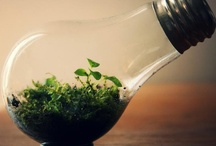Tiny Worlds / Terrariums and fairy gardens: whimsy at it's smallest.