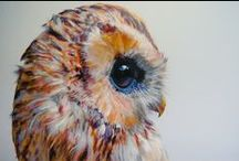 Owl beauty / I adore owls. Here are some lovely pics I collected