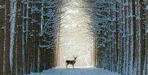 Amazing Nature /