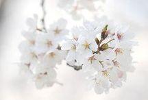 ● Flowers ●