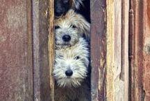 Animals :) / by Mary Hayward Spotswood