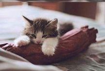 Kittens & pugs