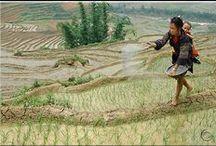 Rice / by Jayne Finch