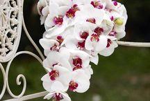Le Rêve bridal bouquet / Our suggestions of bridal bouquet, bridesmaids bouquet and buttonhole