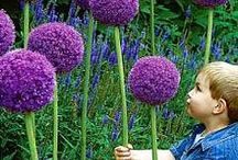 Gardening With Kids / Gardening With Kids Activities