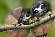 Owls are a Hoot / Hark.  Hoo goes there? / by Rachel Quinn