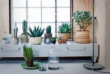 Plant Life / Nature-inspired home decor with natural textures, print, and plant ideas.