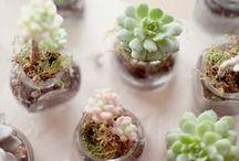 Succulents love
