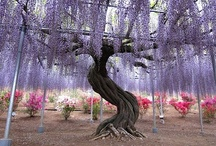 """Wisteria Lane"" / The South's Most Beautiful Vine / by Cherie Byrnes"