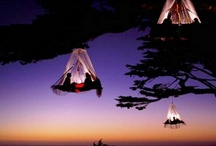 Creative Camping / by Amy Gilham