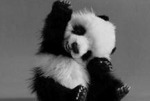 Pandas and lemurs ♥♥♥