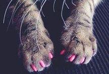 Cute things..