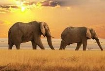 Travel Africa / Be inspired by destination Africa!
