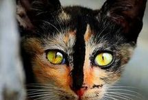 Things every cat owner should know