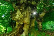 Sacred Grove / by Andrew B