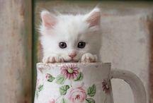 Cute Things / Teddy Bears and Teapots