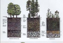 Soil Science / by Mark McClain