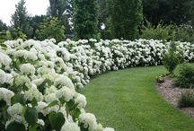 White Garden / Gardening