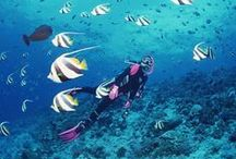 Bucket list - Indojunkie / Before I die...We collect everything that is worth to see and do in Indonesia!