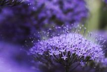 Everything purple and blue / by Leila Jay